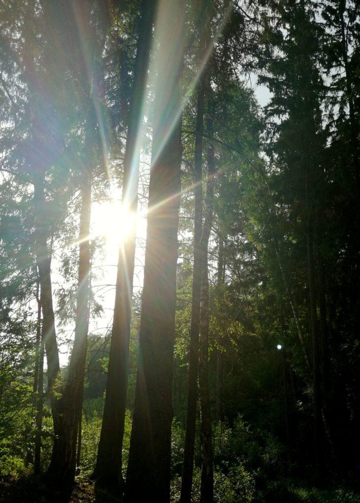 siedlisko-natura-pokoje-las-Warmia